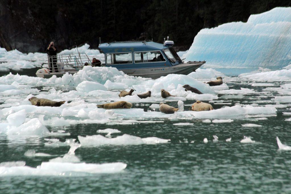 אלסקה – צפיה בבעלי חיים