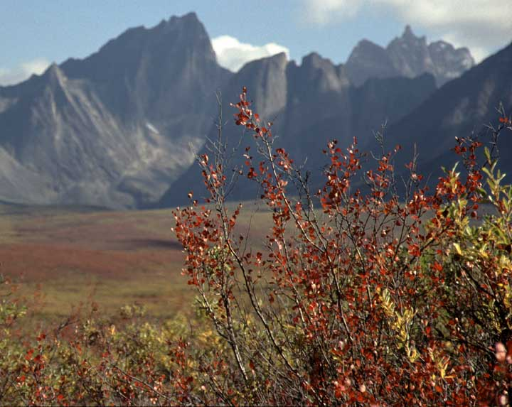 Fall colors in Tombstone Provincial Park, Yukon