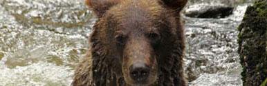 תוספת אופציונלית: צפיה בדובים