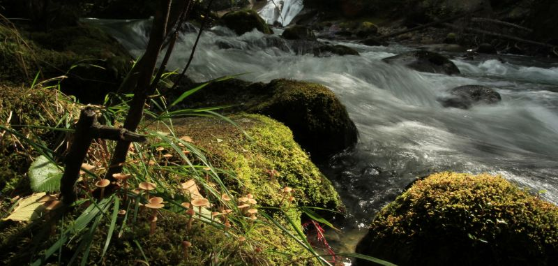 Waterfall in Bella Coola, BC