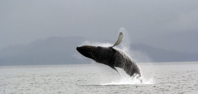 Whale_watching (6)