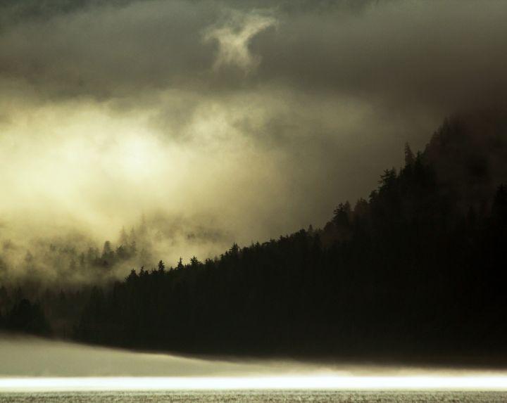 Foggy rainforest, Inside Passage, southeast Alaska