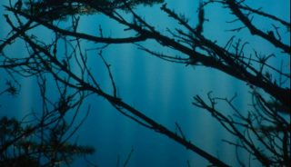 Spruce shade on blue water, Canadian Rockies