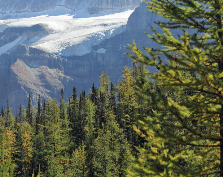 Trees and glaciers in the Canadian Rockies